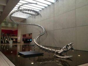A Serpente Enorme que Amedrontou o Mundo 20