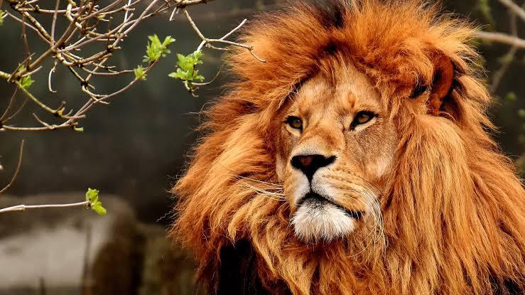 14 Animais mais Mortais e Perigosos do Mundo 41