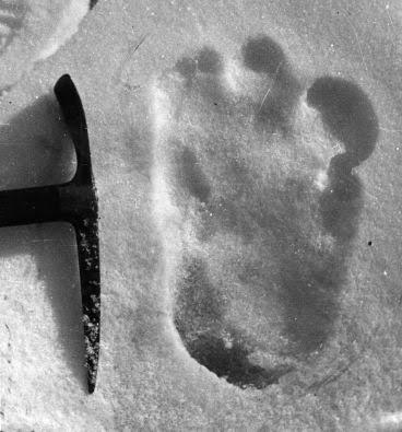 Dyatlov Passos: Mistério Aterrorizante 25