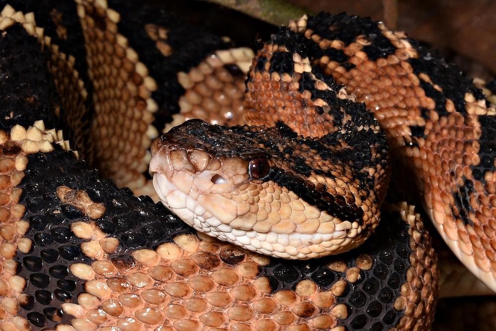 9 Cobras mais perigosas e venenosas do mundo 20
